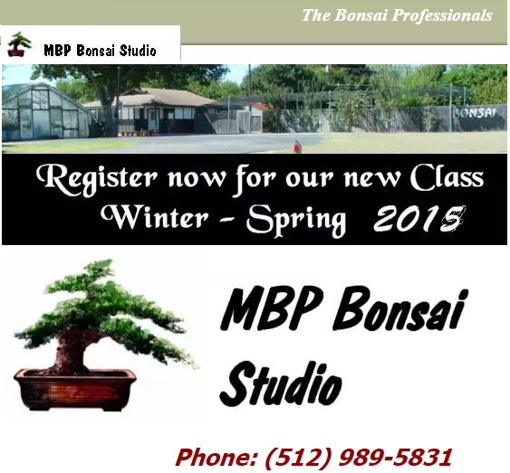 MBP Bonsai Studio