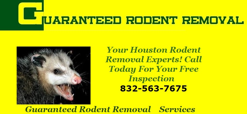 Guaranteed Rodent Removal Services