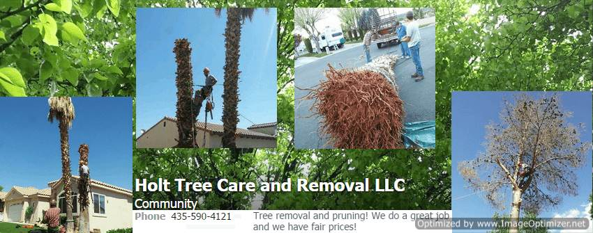 Holt tree care and removal LLC