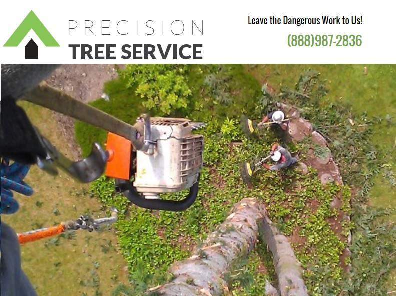 Precision Tree Service In