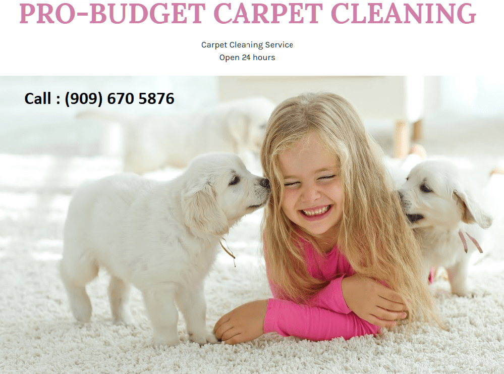 Pro Budget Carpet Cleaning