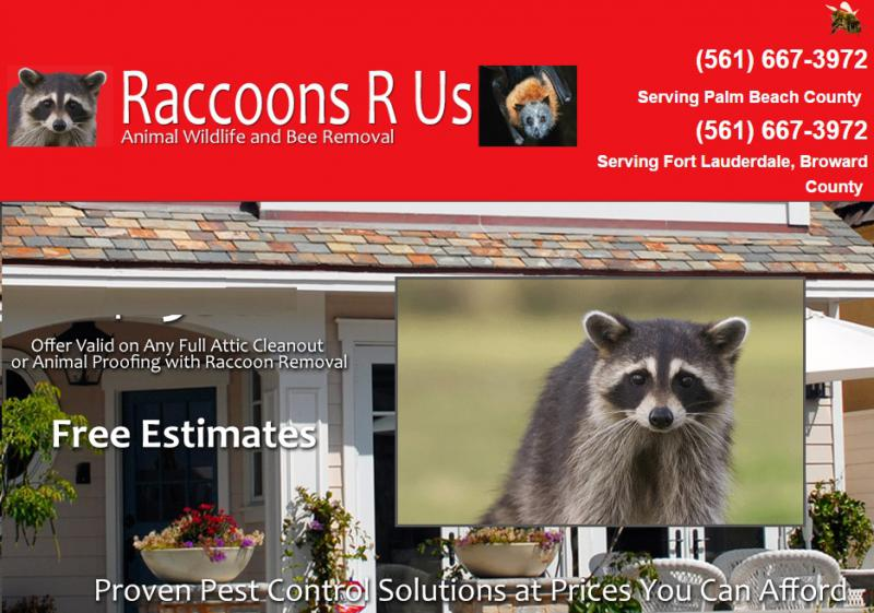 Raccoons R Us Animal Wildlife and Bee Removal