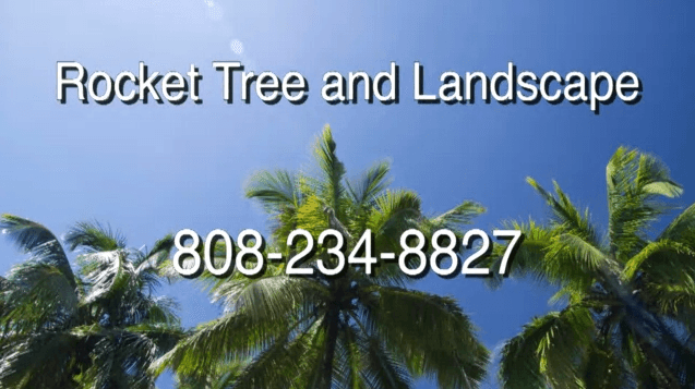 Rocket Tree Surgeons & Landscaping Services