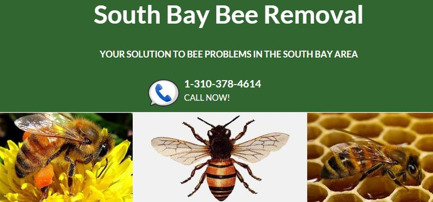 South Bay Bee Removal