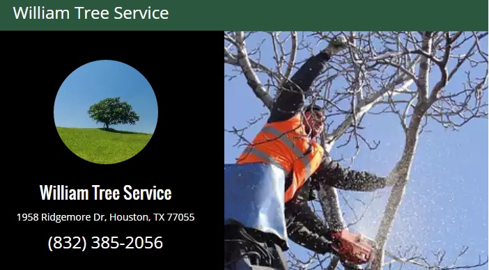 William Tree Service